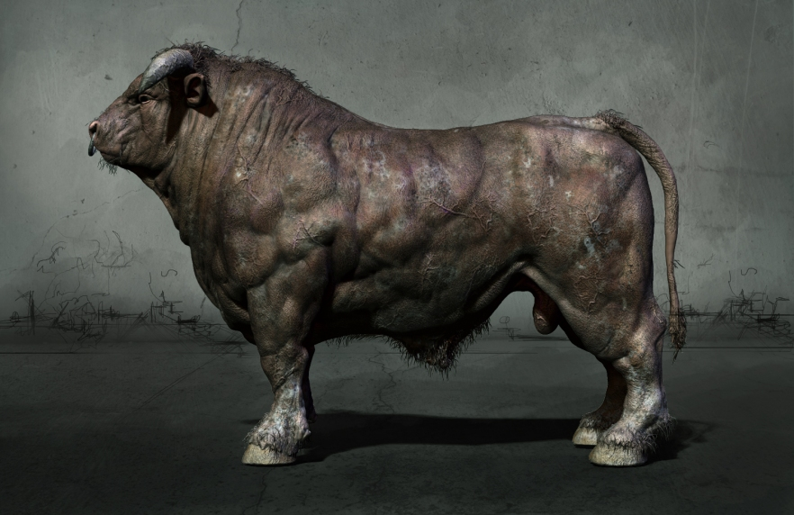 Anatomy study of the bull